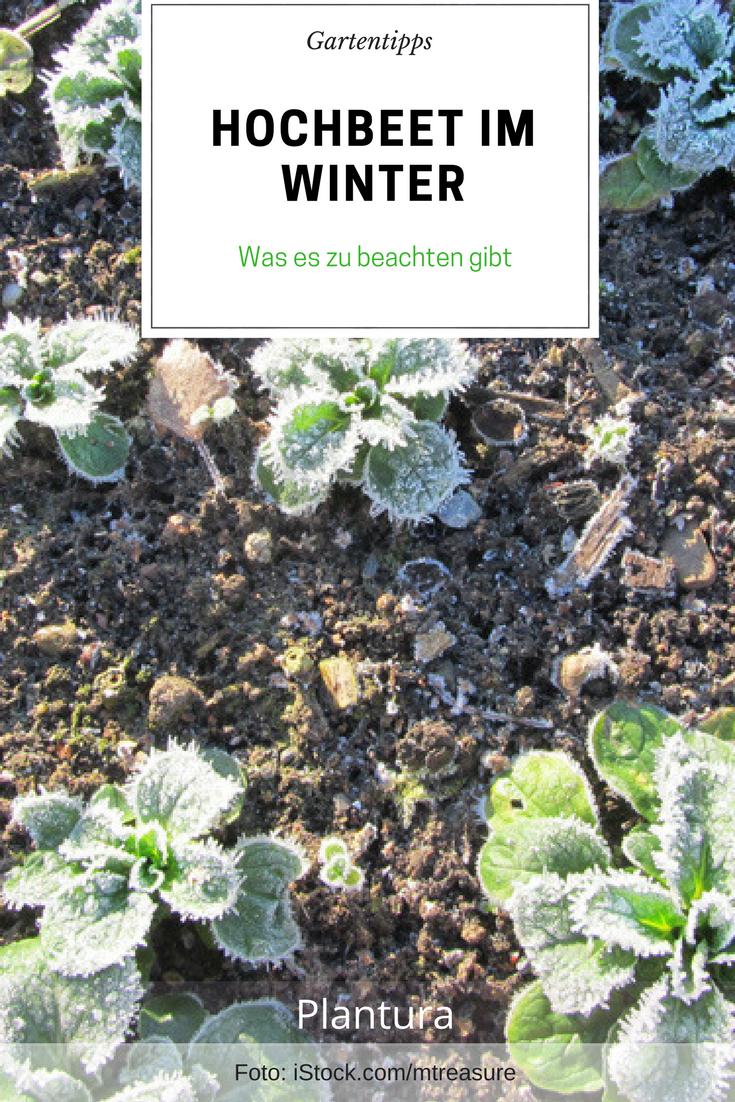 Hochbeet Im Winter Nutzen Ideen Tipps Garten Hochbeet Hochbeet Wintergemuse Anbauen
