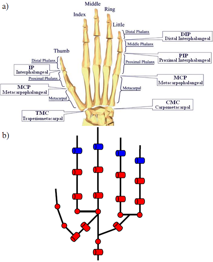 Human Knuckle Diagram Collection Of Wiring Diagram