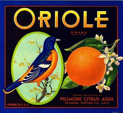 Alva Florida Alva Orange Grapefruit Citrus Fruit Crate Label Vintage Art Print