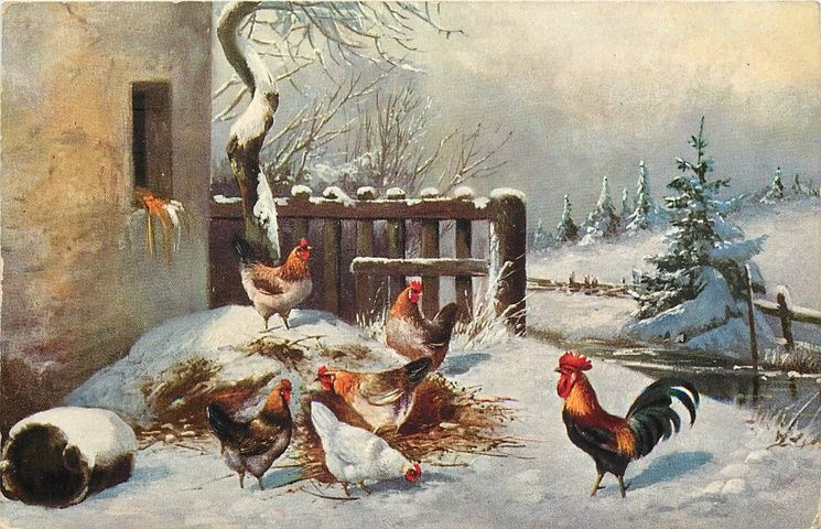 Group looks to legalize backyard chickens in Winter Park ...  |Winter Scenes With Chickens