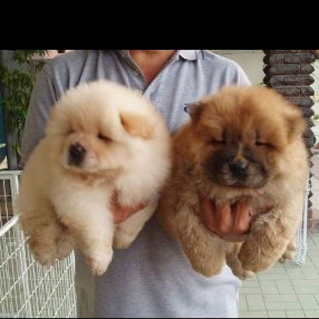 Just want to squeeze them!
