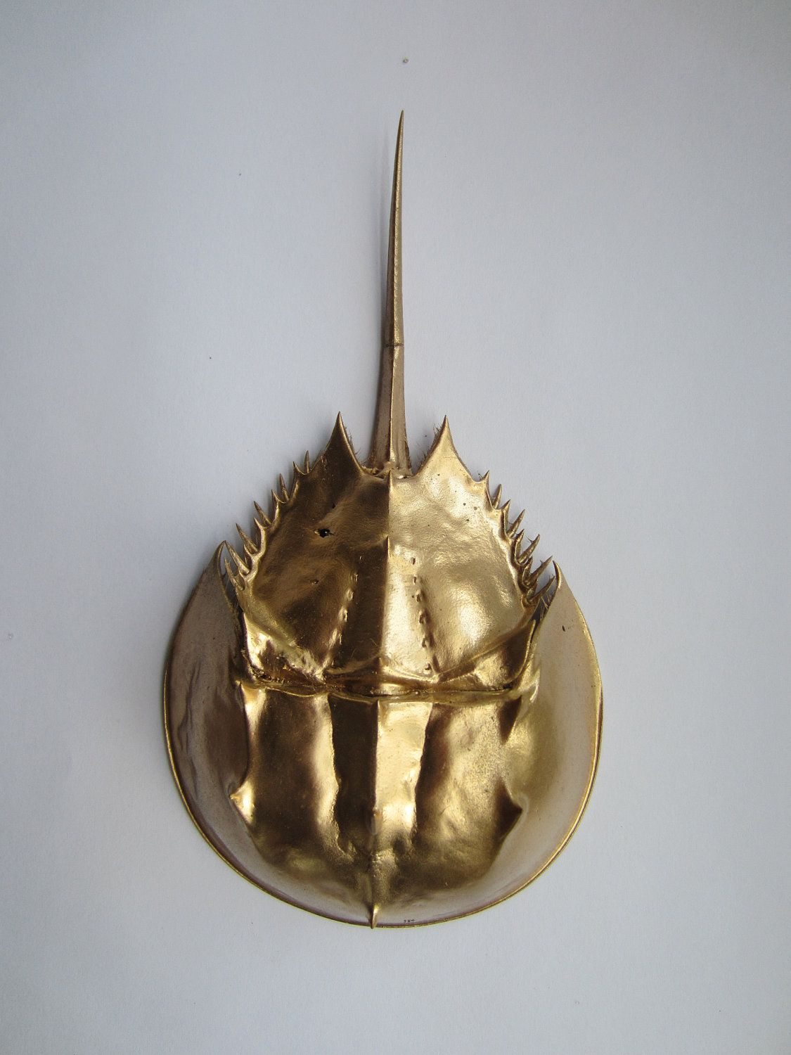 Gold Painted Horseshoe Crab For Christmas Holiday Craft Or Holiday