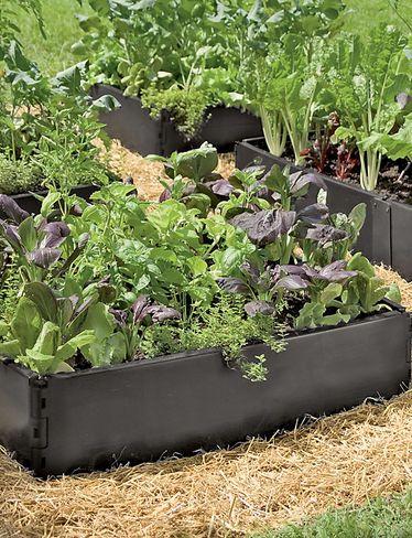 Grow Bed Recycled Plastic Above Ground Garden Beds Gardeners Com Vegetable Garden For Beginners Above Ground Garden Starting A Vegetable Garden