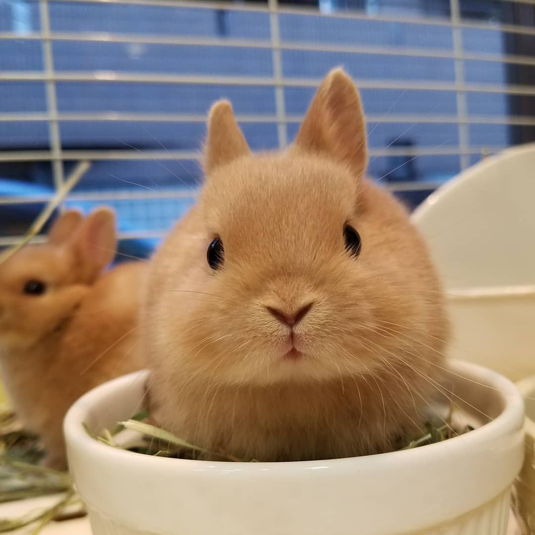 No Hay Ninguna Descripcion De La Foto Disponible うさぎ ペット うさぎ 子ウサギ