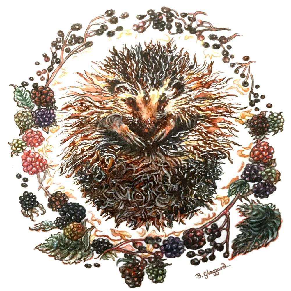 Hedgehog Print By Bronwen Glazzard In 2019