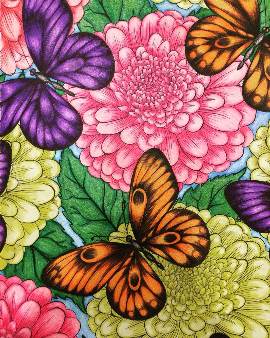 Daisy And Butterflies Secret Garden Coloring Book