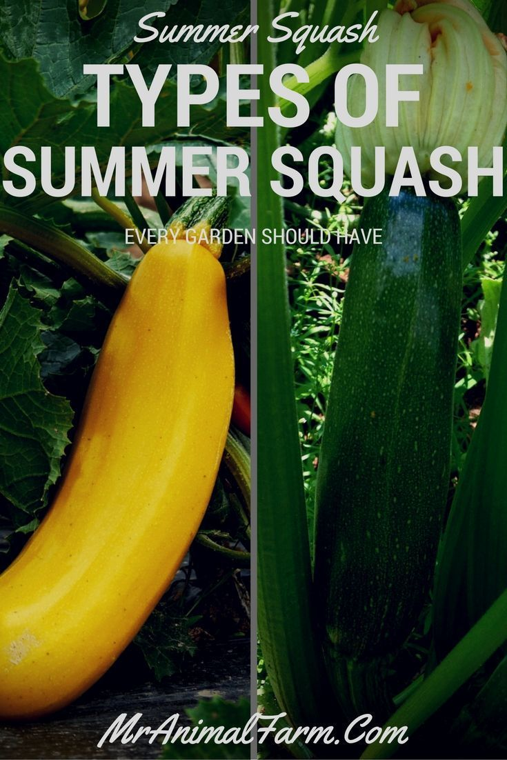 Types Of Summer Squash Every Garden Should Have Easy 400 x 300