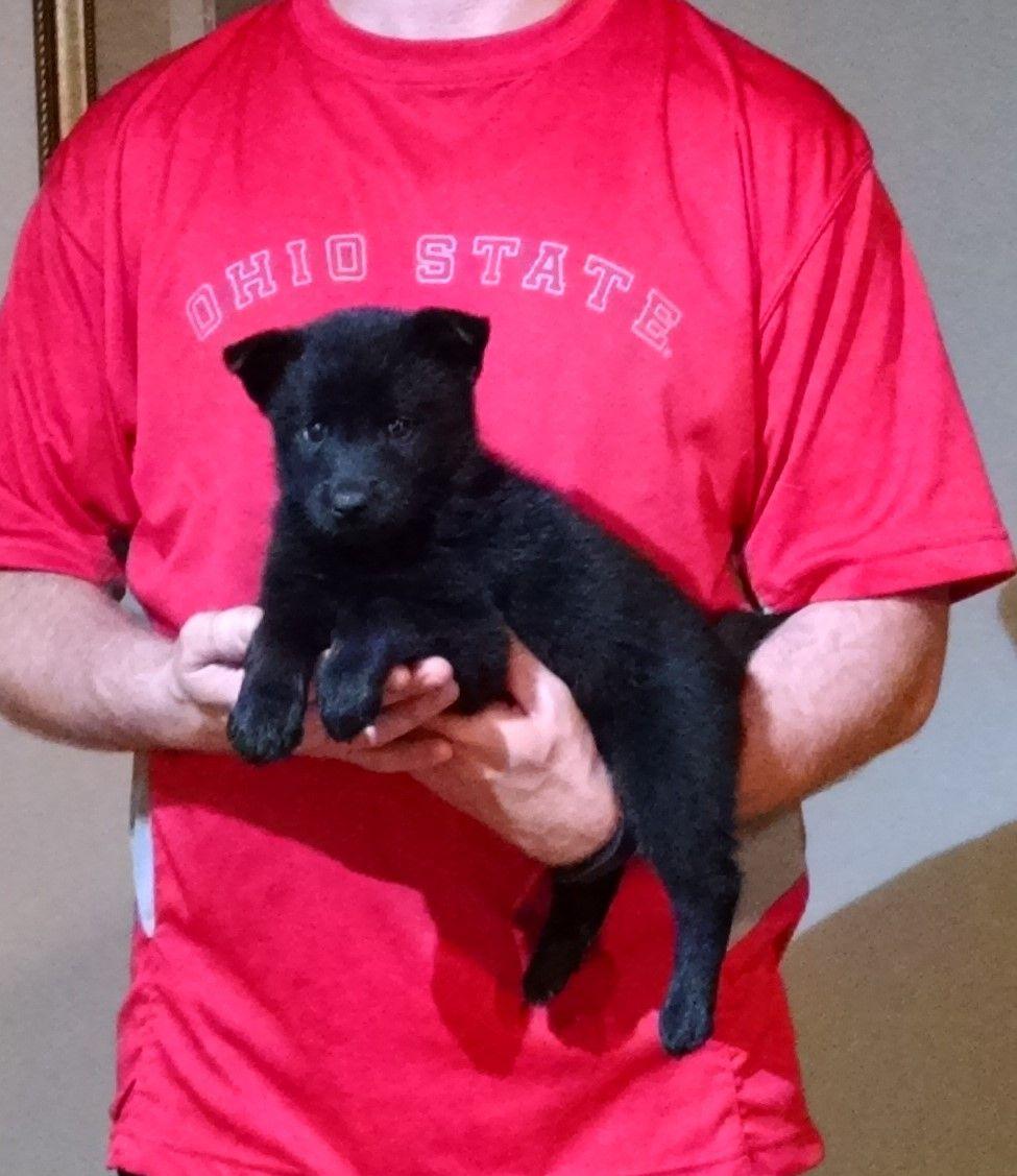 Heaven 2 Earth Rescue Puppies Puppy Heaven Puppy Adoption