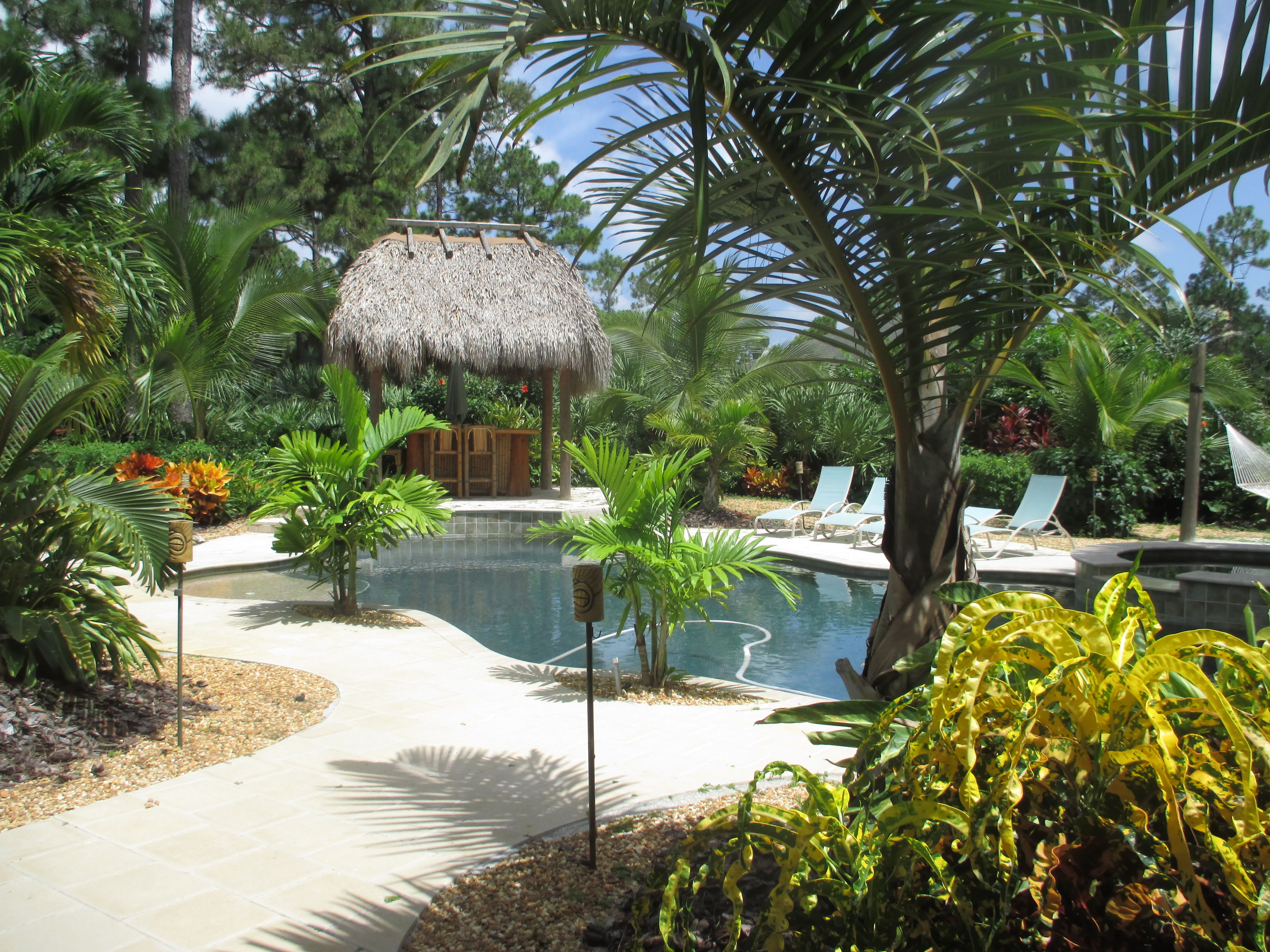 Swimming pool with new tropical landscape hammock u firepit fun