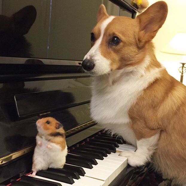 I Heard You Like Corgis Corgi Cute Funny Animals Cute Animals