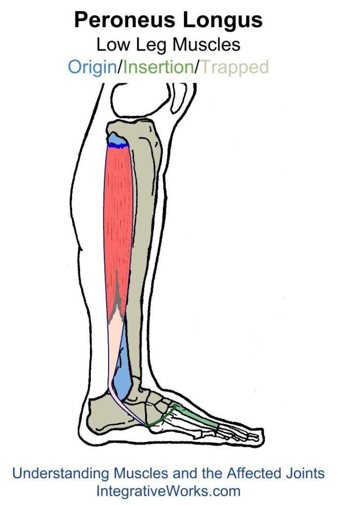 Understanding Trigger Points Painful Unstable Ankle Pinterest