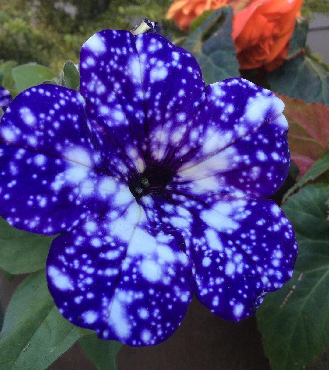 Pin On Unusual Flowers