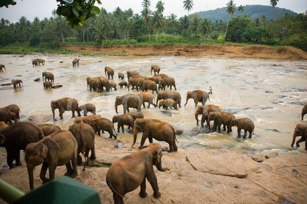 Elephant orphanage, Kandy Sri Lanka