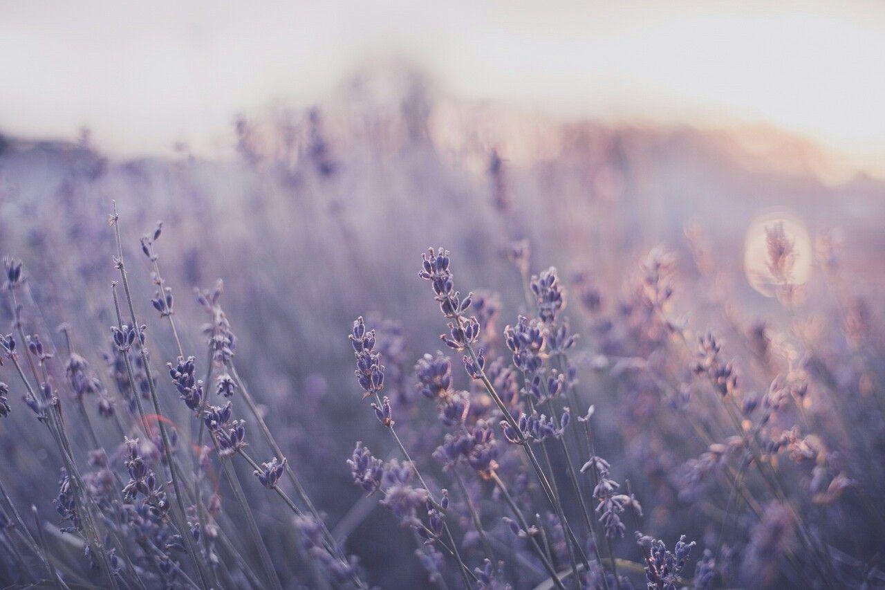 Pinterest Universexox Flower Aesthetic Purple Aesthetic Lavender Aesthetic