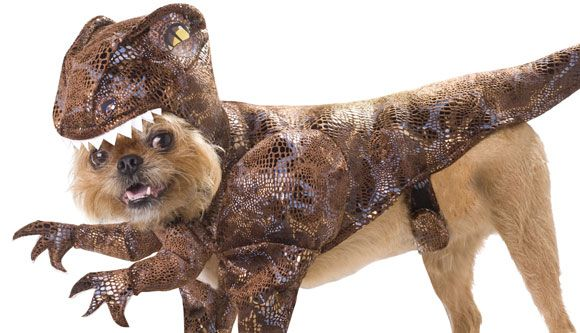 Raptor Dog Costume Pet Halloween Costumes Pet Costumes Raptor