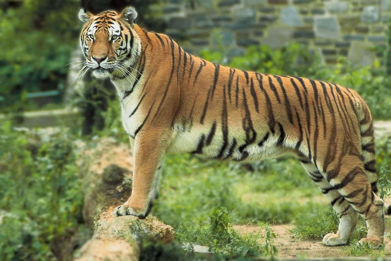 Top 10 Indian Animals In The World Rainforest animals