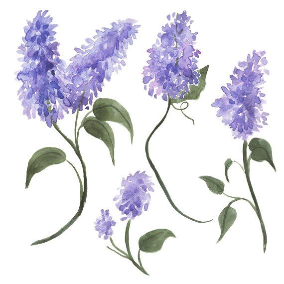 watercolor lilacs clip art the eye of the beholder pinterest rh pinterest com lilac clip art free lilac bush clip art