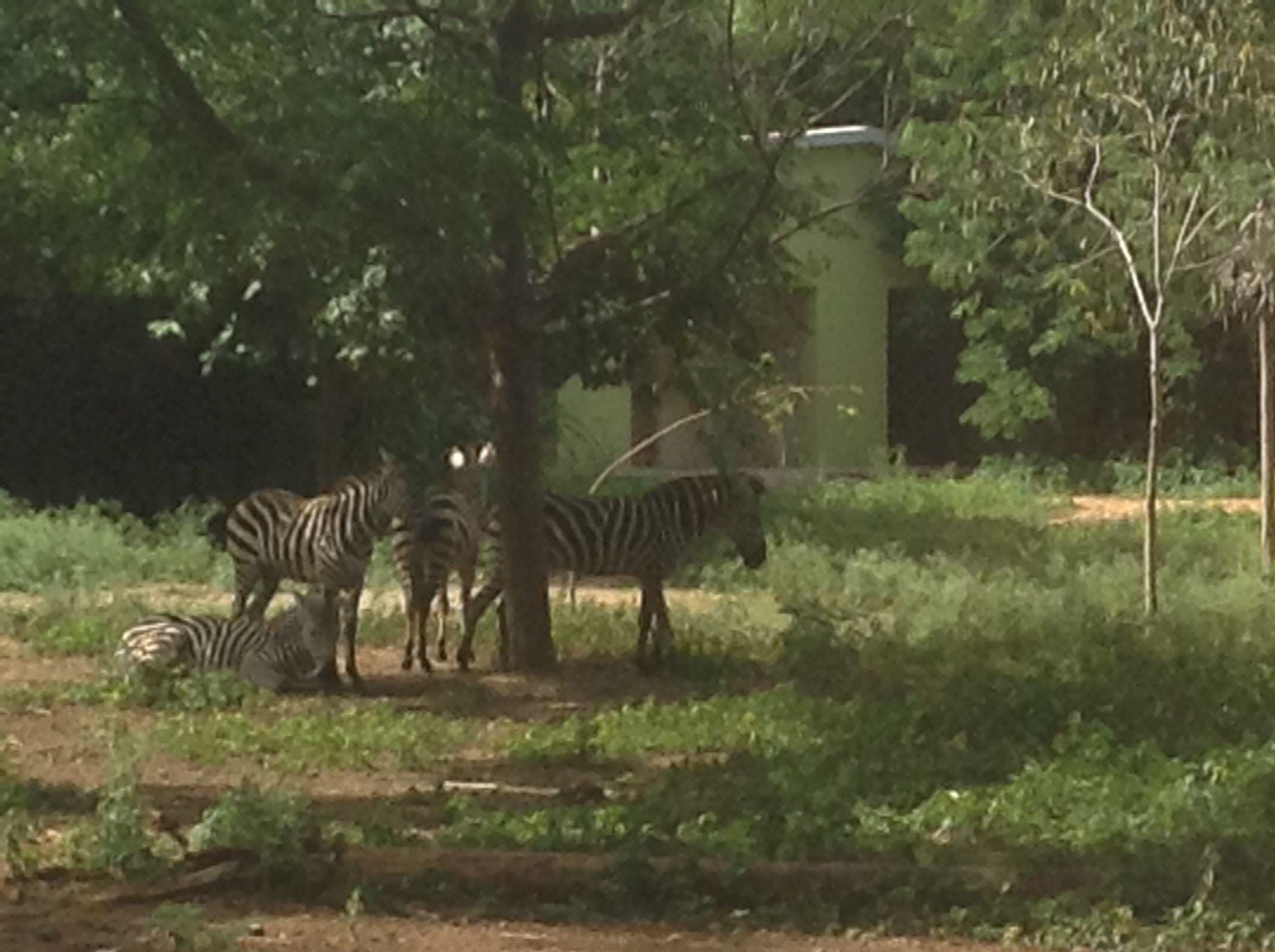54ef11faafdbb90650f4ce96fd706a1b - Mysore Zoo Sri Chamarajendra Zoological Gardens