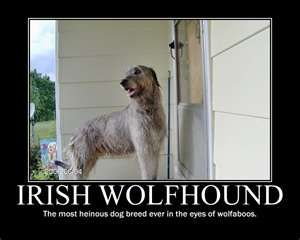 Irish Wolfhound.... I want one!!!