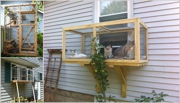Pin By Kayla Johanson On Random Cat Enclosure Outdoor