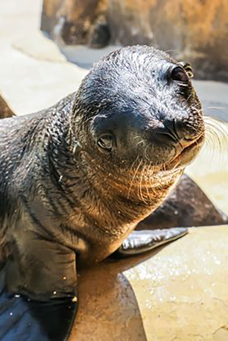 Adorable Baby Sea Lions Born Just In Time For World Cup At Blackpool Zoo Sea Animals Wildlife Adorableanimals Cu Baby Sea Lion Sea Lion Underwater Animals