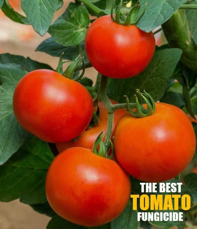 7 Best Fungicide For Tomatoes 2020 Guide And Reviews In 400 x 300