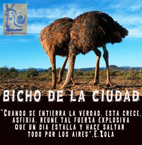 BICHO DE LA CIUDAD: NEGACIÓN
