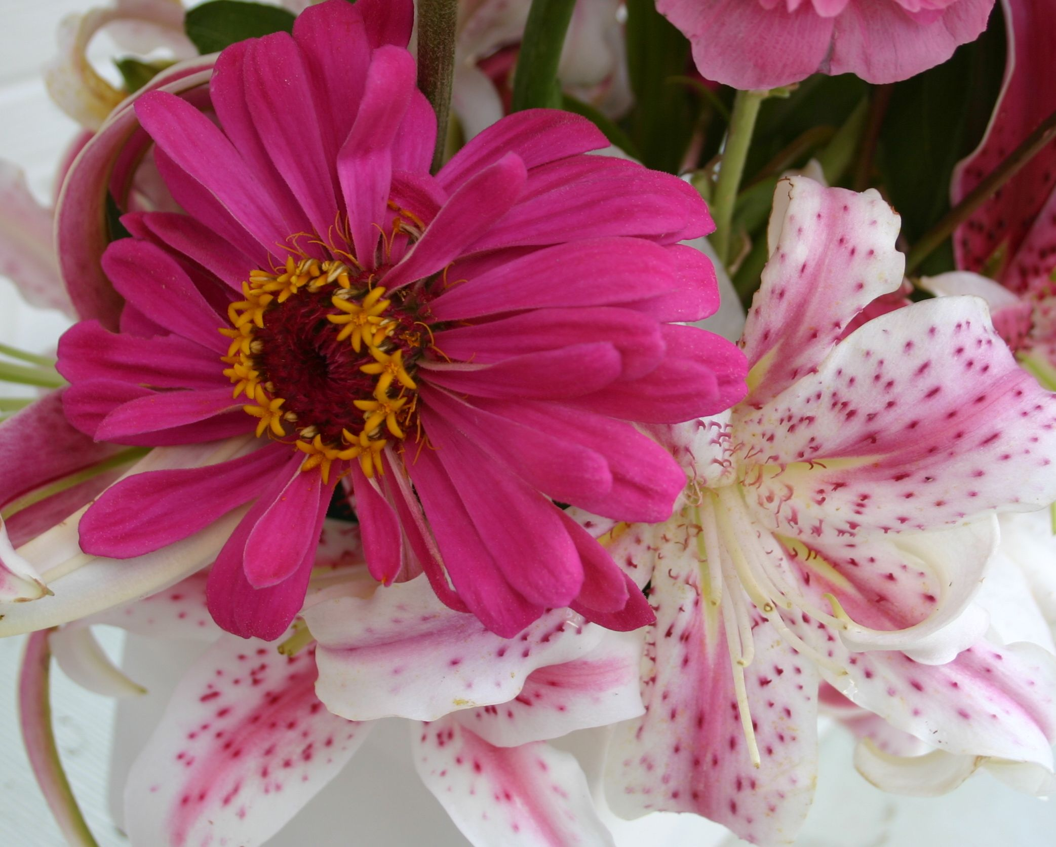 Pink State Fair Zinnia And Oriental Lily Muscadette Spicker