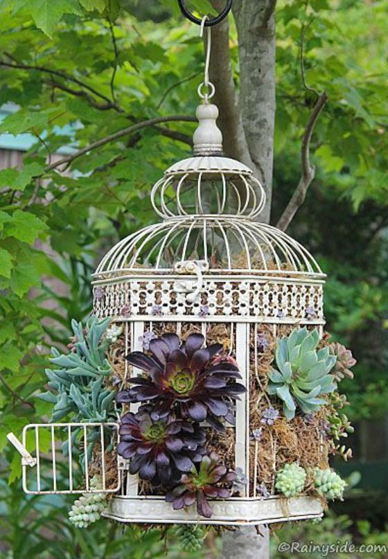 bird cage as hanging planter filled with succulents