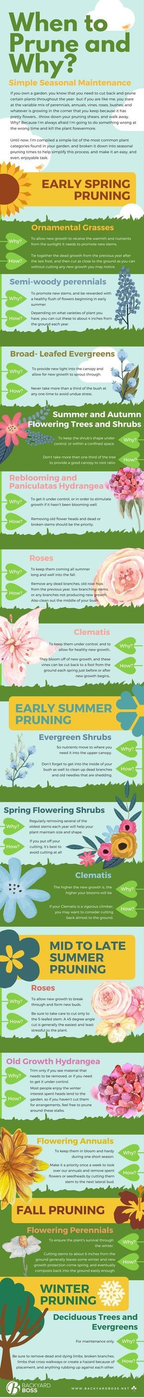 Simple seasonal maintenance when to prune and why pruning shears