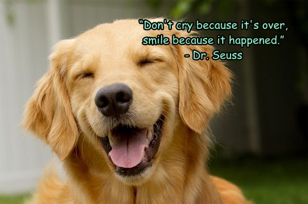 """Don't cry because it's over, smile because it happened."" - Dr. Seuss #quote #dog #puppy #smile #life #happy"