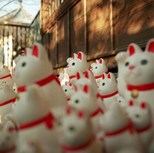 beckoning cats by Hikaru Murasaki on Flickr.