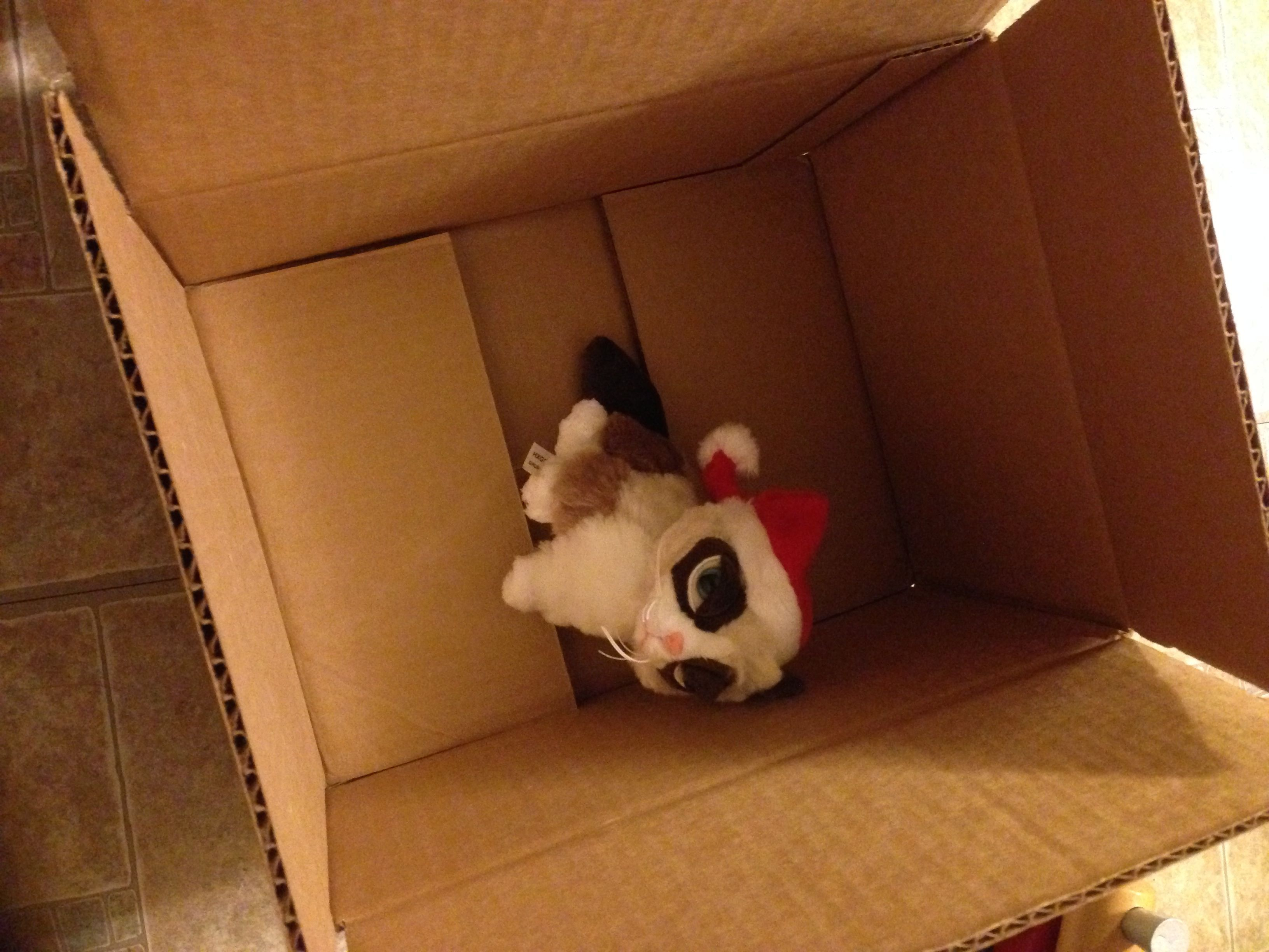 woot boc feb 2015 box mystery boxes bags pinterest mystery