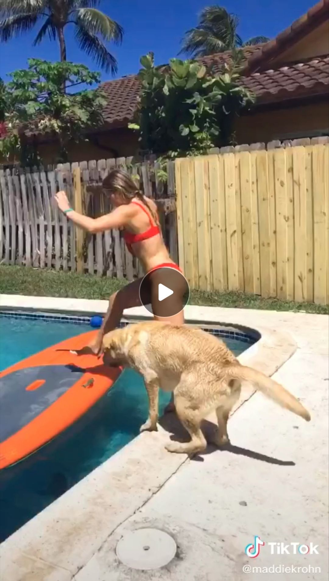 The Cutest Tik Tok Dogs Ever Cute Dogs Funny Memes Funny Animal Videos