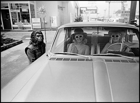"""An """"ape"""" on the streets of Los Angeles during a break from filming The Planet of the Apes, 1967. Photograph by Dennis Stock"""