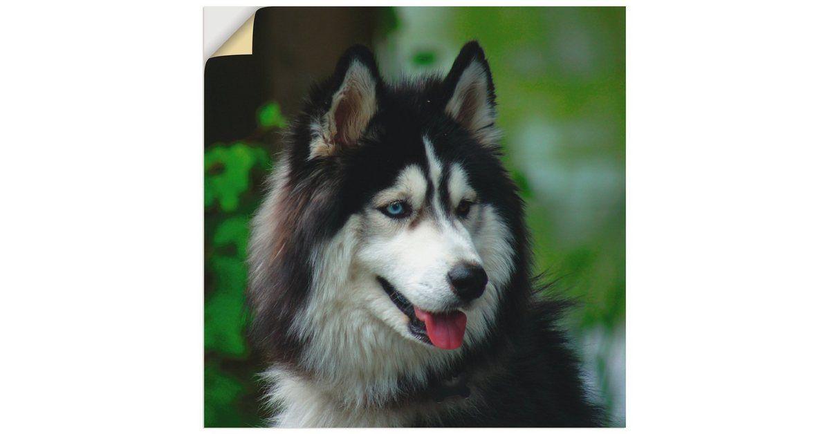 Wandfolie »Kattobello: Husky Portrait«