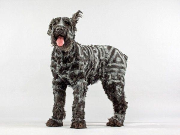 dog hair dye black