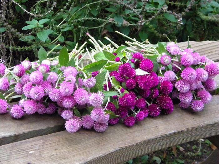 Purple Fall Flowers Google Search