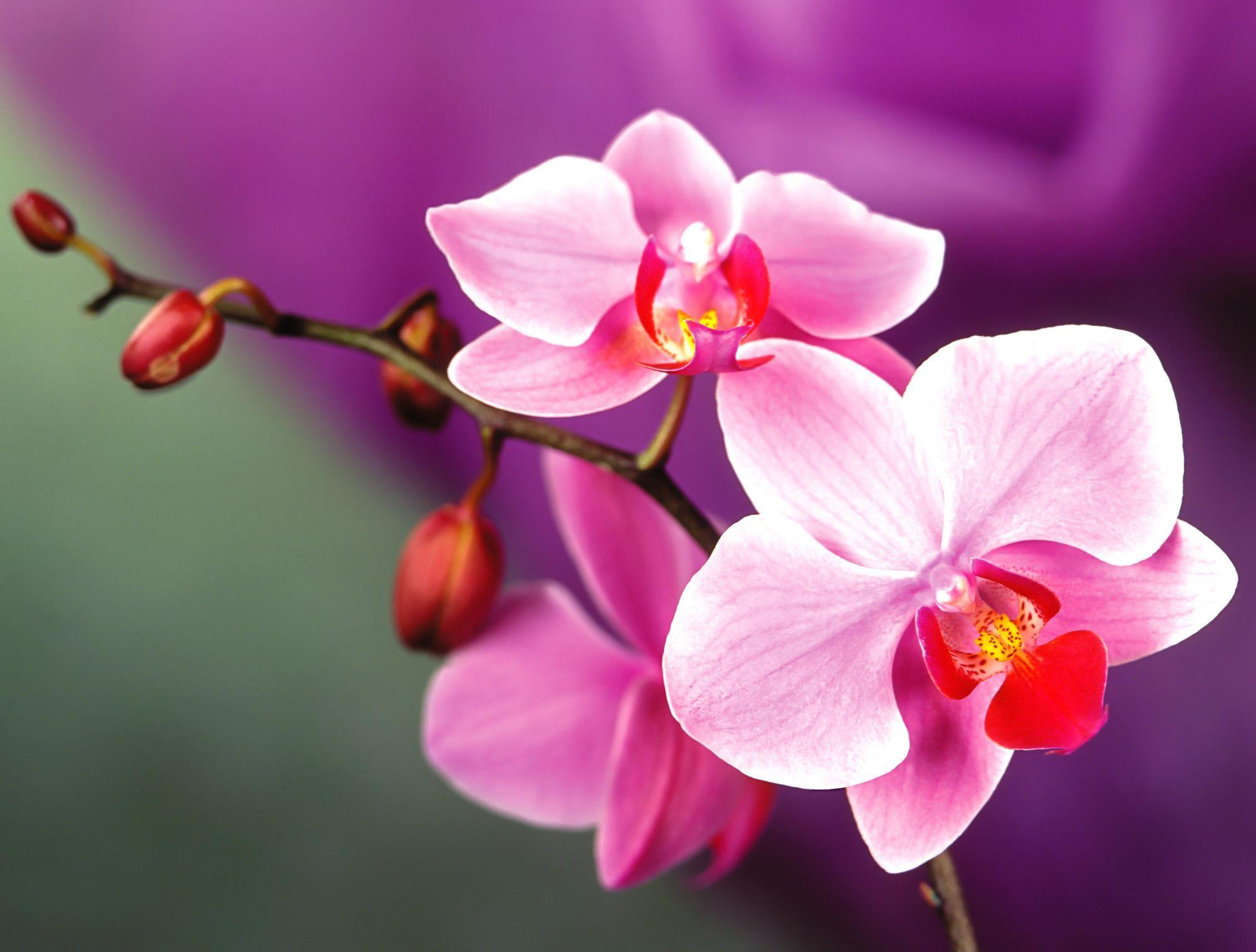 Красивые орхидеи открытки