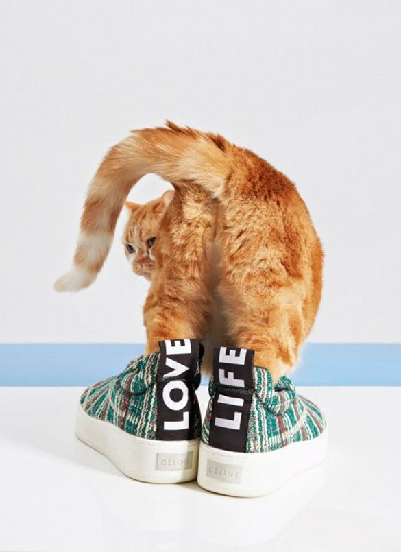 The most recognizable shots of Vogue's editorial is this one of an orange tabby in the tartan Céline sneakers from S/S 15.