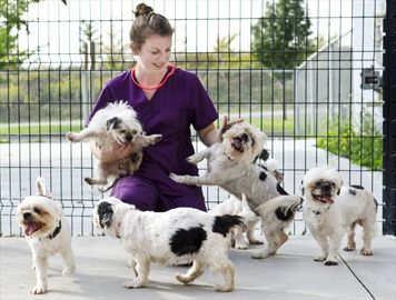 Homes needed for 15 rescued Shih Tzus www.hbspca.com