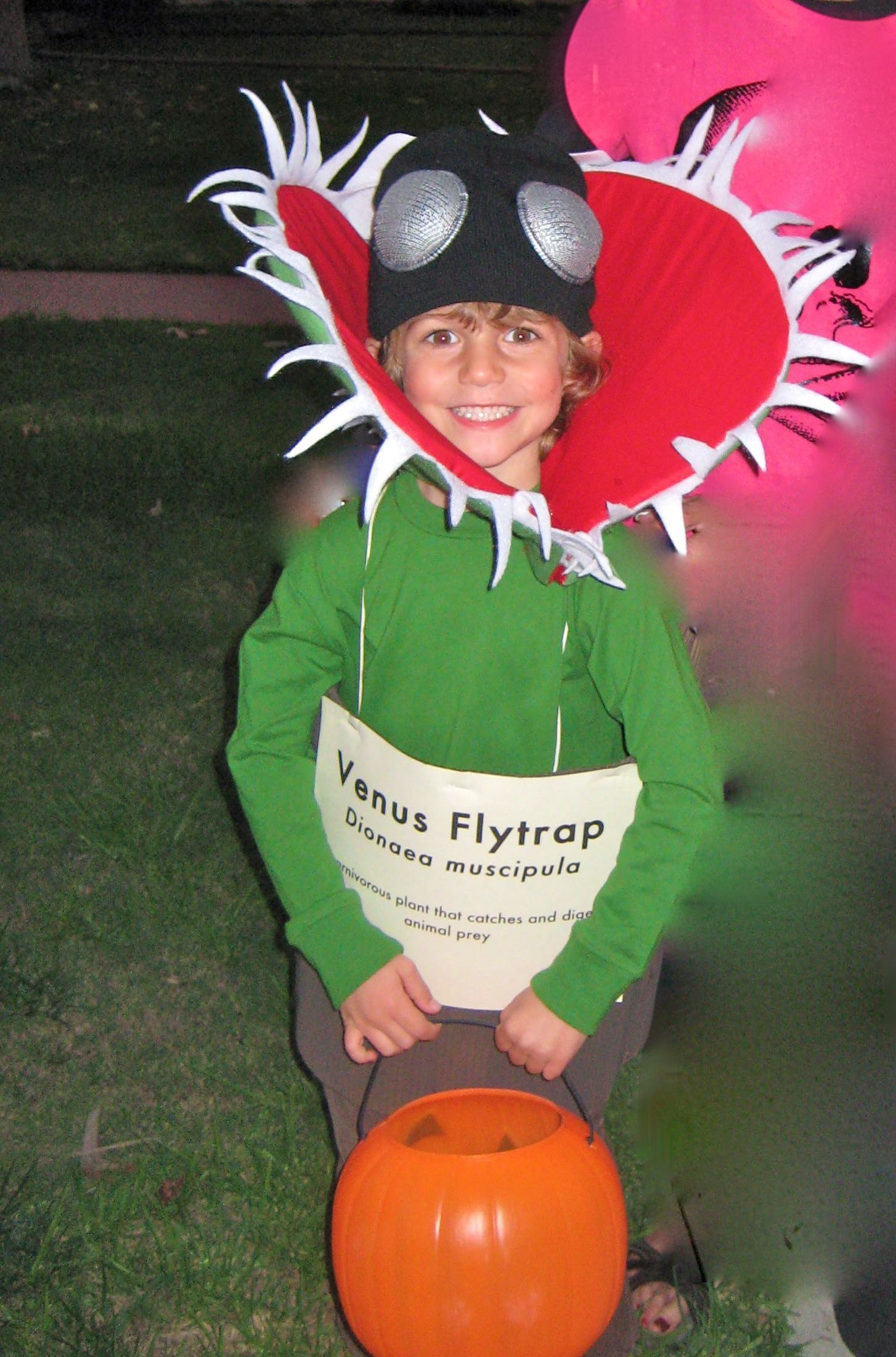 venus fly trap costume kids Google Search in 2020 Fly