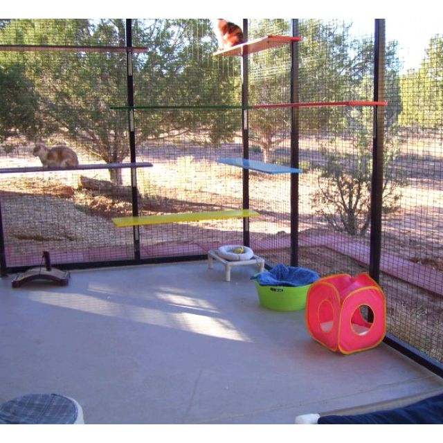 Pin On Cattery Ideas
