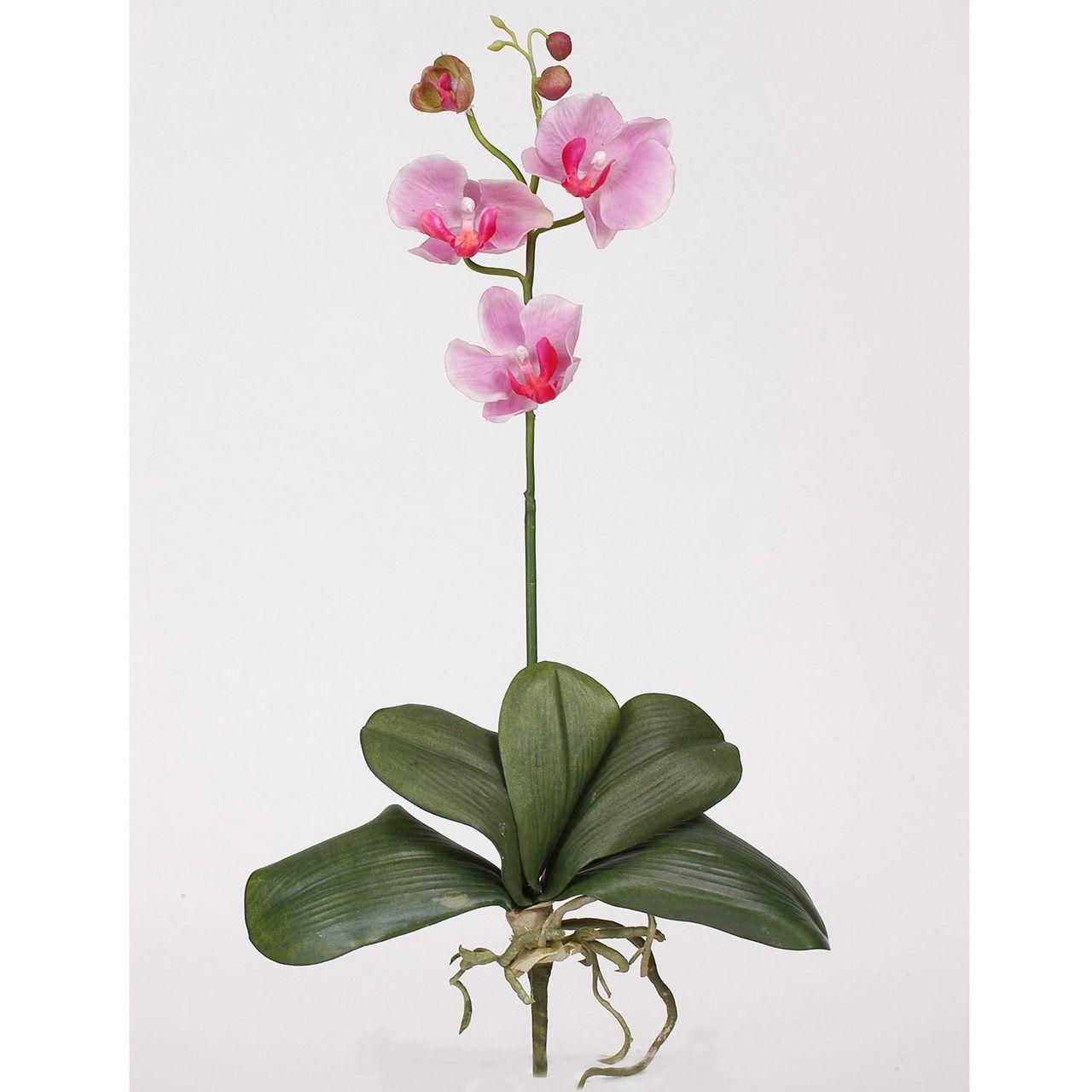 TheMainHut - Mini Phalaenopsis Silk Orchid Flower w/Leaves (6 Stems), $45.89 (http://www.themainhut.com/mini-phalaenopsis-silk-orchid-flower-w-leaves-6-stems/)