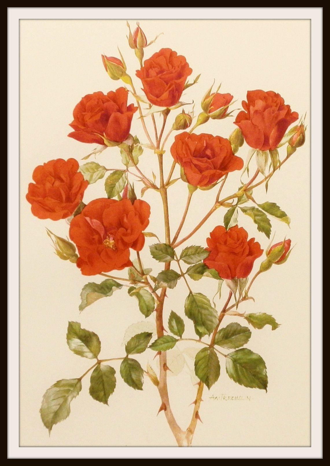 Vintage Botanical Image Art Print   Pinterest   Art images, Printing ...