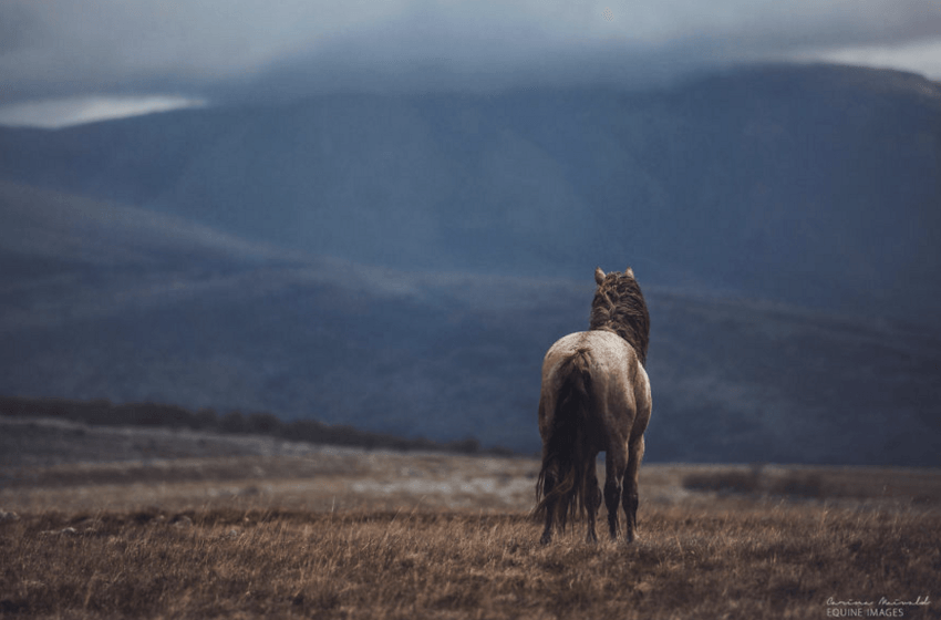 She Photographs A Horse Alone in A Field. What She Captures On Film? Astonishing...