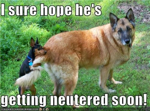 Unfortunately We Don T Offer Tutoring Either But Are Your Dogs Spayed And Neutered Funny Animals Funny Dogs Funny Dog Pictures
