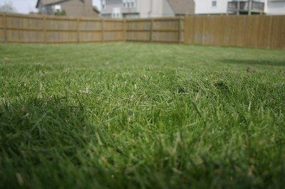 Growing Bermuda Grass Learn About The Care Of Bermuda Grass is part of lawn Care Lime - Bermuda grass is an adaptable warmseason turf that many people use for their lawns  Learn more about how and when to plant Bermuda grass in the following article  Click here for more info
