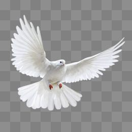 Image Result For Copyright Free Dove Logos Iphone Background Images Black Background Images Photo Background Images Hd