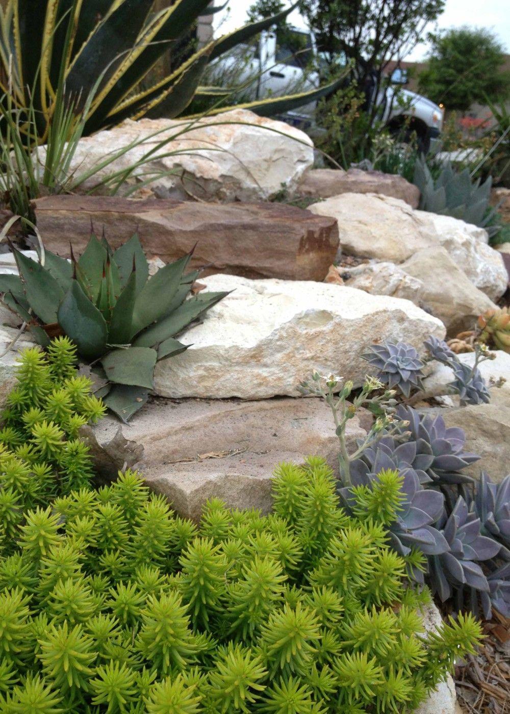 succulents within a san antonio garden can be spectacular